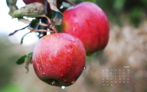 November 2010 Desktop Calendar - Rainy Apple Orchard - Bela Lumo Photography
