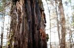 Hiking in Parc national de la Jacques-Cartier